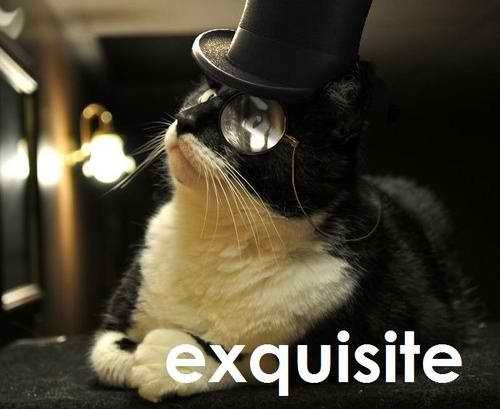 Cat in top hat