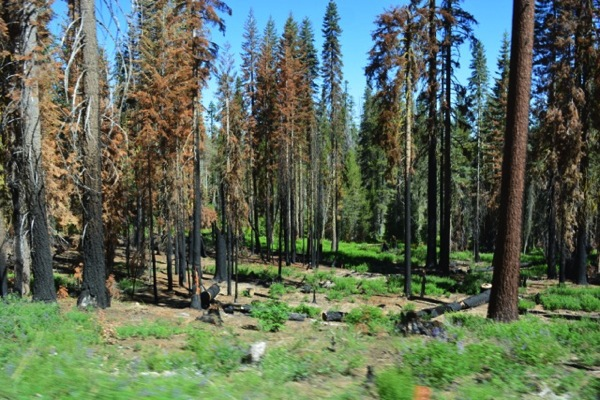 Rim Fire area, near Groveland