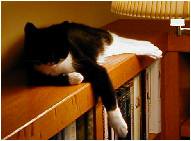 Cat sleeping on bookcase