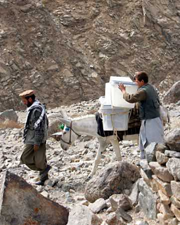 Afghan men using a donkey carry ballot boxes