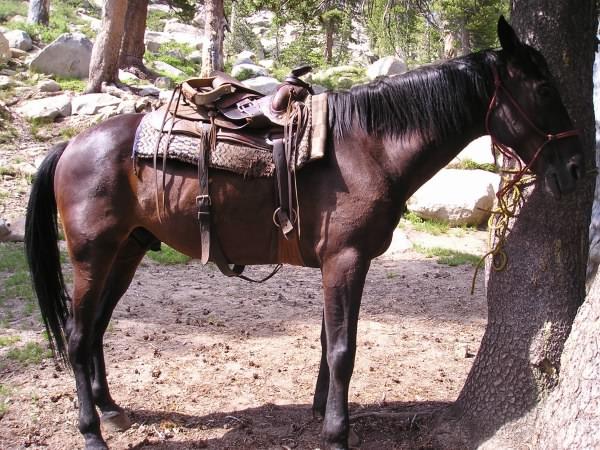 "My horse, ""Robert"""