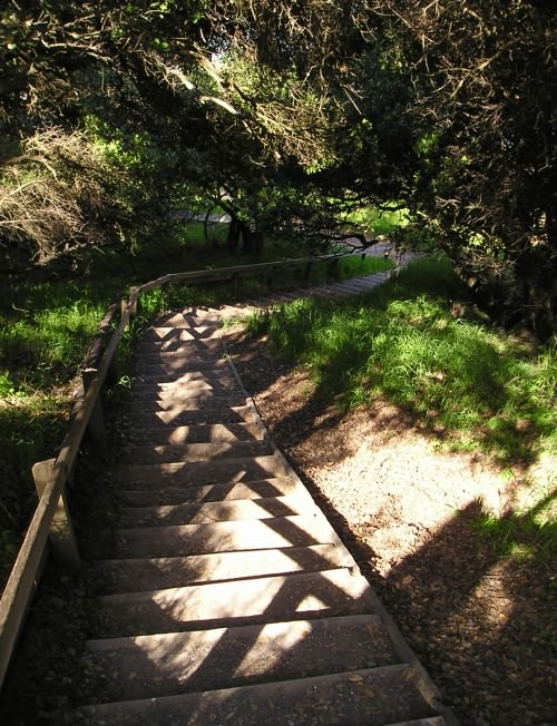 Stair on Angel Island trail